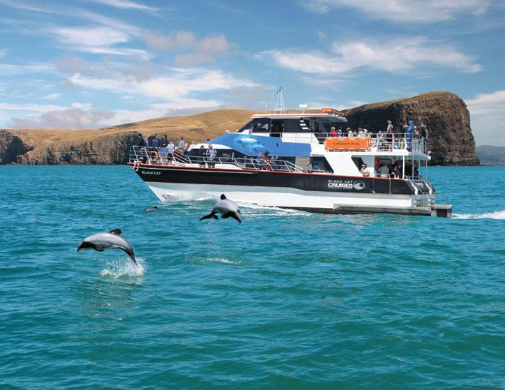 Akaroa-Nature-Cruise