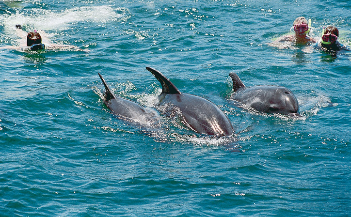 bay-of-islands-swim-with-dolphins
