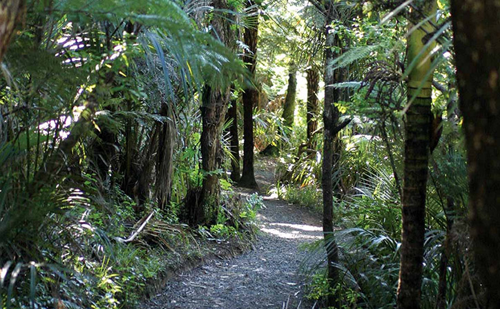 Best Small Group Sightseeing Tour In Auckland